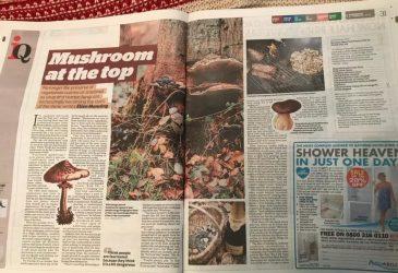 Mushroom at the top